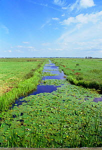 Drainage dyke at Buckenham Marsh RSPB Reserve, Norfolk, UK host to rare & common flora  -  Nick Barwick
