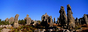 Eroded limestone pinnacles in the Stone forest, Shinling, Yunnan Province. China  -  Pete Oxford