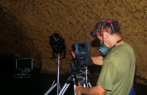 Camerman Jim Clare on location in Trinidad, using an infra red sensitive camera to record bat behaviour in cave and wearing a mask  -  Nick Upton