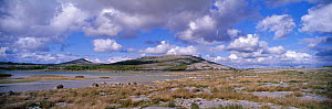 Panoramic view of Mullach Mor with limestone pavement Burren NP, Co Clare, Ireland  -  DAVID TIPLING