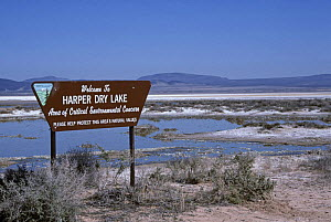 Harper Dry Lake with water - Area of Critical Environmental Concern, California, USA - Paul Johnson