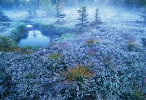 Peat bog landscape on winter morning, Vosges Mountains, France, Europe. Eric Hosking Award winning portfolio in BG Wildife Photo Competition 2002 ERIC_HOSKING 2002  -  VINCENT MUNIER