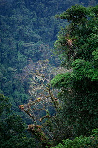 View of Monteverde yropical cloud forest Reserve, Costa Rica  -  Dietmar Nill