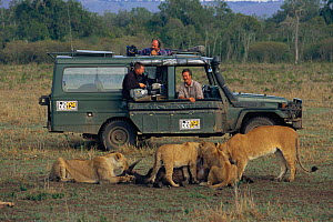 Jonathan Scott, presenter, with camerman watches lion pride feeding from landrover, Masai Mara NR, Kenya. BIG CAT DIARY 2000 - Angela Scott