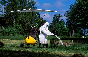 Researcher + microlite in crane costume with Whooping crane chicks, USA. Operation migration  -  Mark Payne-Gill