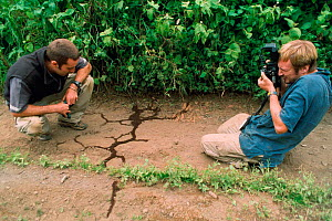 Dale Morris and Ralph Bower watch and film a column of African driver / Siafu (Safari} ants {Dorylus / Anomma species} crossing road. Tanzania, East Africa. 2002  -  Martin Dohrn