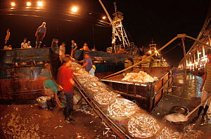 Fish arriving at market, Navotas, Manila, Philippines.  -  Jurgen Freund