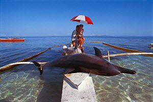 Bottlenose dolphin killed when caught in drift net {Tursiops truncatus} Philippines.  -  Jurgen Freund