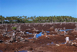 Mangrove deforestation to make way for fish ponds. Philippines.  -  Jurgen Freund