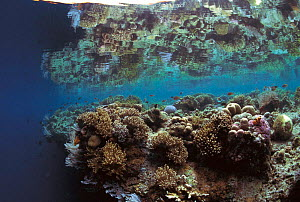 Coral reef at low tide. Philippines, Indo Pacific  -  Jurgen Freund