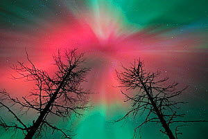 Aurora borealis colours in night sky, northern Finland, September 2001. Red corona at beginning of storm - Jorma Luhta