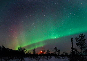 Aurora borealis colours, moon and Jupiter in night sky, northern Finland, winter 2002 - Jorma Luhta
