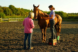Equine physiotherapist at work on horse, Hampshire UK - TJ Rich