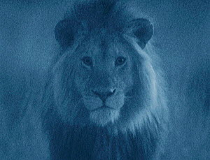 Male Lion portrait in moonlight, Serengeti NP, Ngorogoro Conservation Area, Tanzania, East Africa. Image taken using 'Starlight Camera' technology without artificial lighting  -  Martin Dohrn