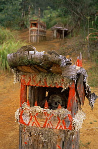 Traditional Huli wigman grave, Papua New Guinea, 1991  -  NEIL NIGHTINGALE