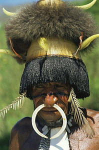 Dani man portrait, Irian Jaya / West Papua, New Guinea 1991 (West Papua).  -  NEIL NIGHTINGALE