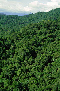 Aerial view of lowland tropical rainforest, Irian Jaya / West Papua, Papua New Guinea, 1991 (West Papua).  -  NEIL NIGHTINGALE