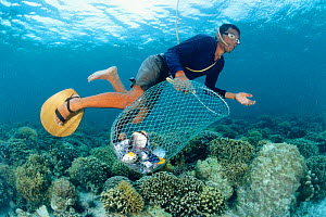 Fisherman collecting fish killed by dynamite explosion on coral reef Philippines 2000  -  Juergen Freund