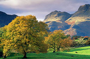 Autumn in Langdale, near Elterwater, Lake District National Park, UK November 1996 - David Noton