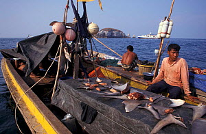 Fishermen drying shark fins, sharkfinning, Burma, Myanmar, South East Asia NOT FOR SALE IN USA - Brandon Cole