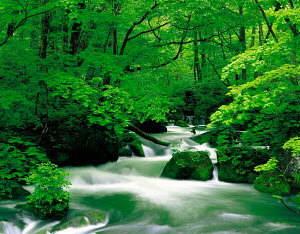 N-13802 River and waterfall in woodland, Aomori, Japan.  -  Aflo