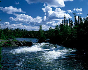 N-15302 River flowing through coniferous forest, Canada.  -  Aflo