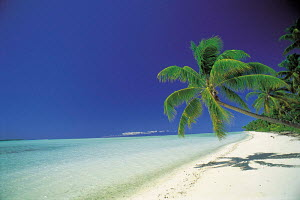 N-7004 Tropical beach shoreline with palm tree, Tahiti, South Pacific  -  Aflo