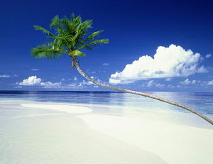 N-7005 Tropical white sand beach shoreline with single palm tree  -  Aflo