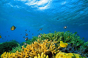 N-11405 Underwater coral reef landscape with tropical fish - Aflo