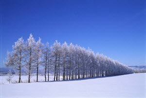N-9603 Winter landscape with line of trees in snow covered fields and blue sky, Teshikaga-Cho, Hokkaido, Japan - Aflo