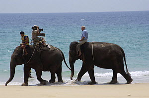 Sir David Attenborough riding Indian elephant during filming of 'Life of Mammals' for BBC tv, Thailand, 2002  -  Neil Lucas