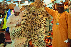 Leopard skin {Panthera pardus} for sale in duty free shop, Lagos airport, Nigeria 2002 - Fabio Liverani