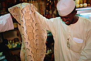 Python snake skin for sale in duty free shop, Lagos airport, Nigeria. 2002 - Fabio Liverani