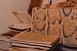 Python snakeskin products, handbags and wallets, for sale in duty free shop, Lagos airport, Nigeria. 2002 - Fabio Liverani
