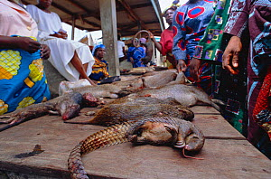 Bush meat -- dead wild animals for sale on market stall, Epe, Lagos, Nigeria, West Africa. 2002 - Fabio Liverani