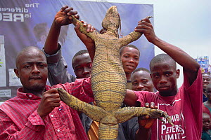 Nile monitor for sale {Varanus niloticus} held by captors. Lagos, Nigeria, West Africa 2002 - Fabio Liverani