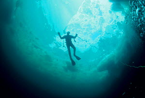 Looking up at silhouette of Diver under ice. Magdalen Islands, Atlantic, Canada  -  Jurgen Freund
