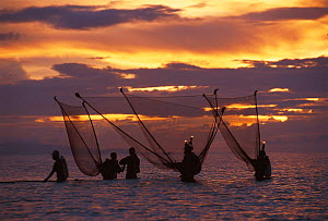 Shrimp fishermen with push nets and lights at sunset, Bicol, Philippines  -  Jurgen Freund
