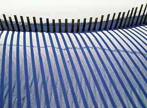 Shadows on white sand from fence preventing sand dune erosion. Gulf Is NS, Florida USA  -  Thomas Lazar