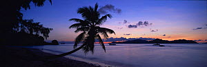 Anse Severe Beach and Palm Tree at sunset, La Digue Island, Seychelles, Indian Ocean - Gavin Hellier