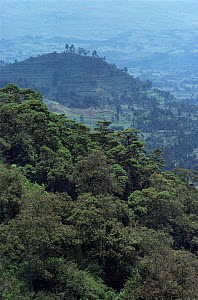 Deforestation of national park for subsistence agriculture, Parc des Volcans National Park, Rwanda - Jabruson