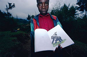 Child with drawing of Mountain gorilla, Parc des Volcans NP, Rwanda. encourages involvement in wildlife conservation  -  Jabruson