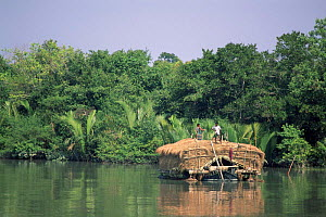 Boat with dried grass by mangrove forest, Sundarbans WHS, Sundarbans, Bangladesh  -  Ian Lockwood