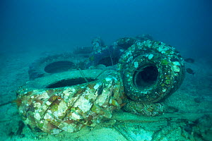 Old truck tyres tied together and sunk to form base for artificial reef, Philippines  -  Jurgen Freund