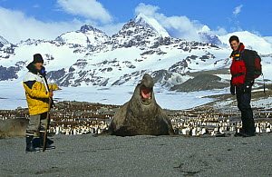 Presenter Steve Leonard with Jerome Poncet next to Southern elephant seal bull (Mirounga leonina) on location for Extreme Animals programme,  St Andrews Bay, South Georgia, 2001 - Tom Hugh-Jones