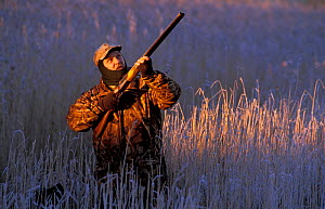 Nigel McMullan shooting wildfowl in reeds. Montrose Basin LNR, Angus, Scotland, UK  -  Niall Benvie