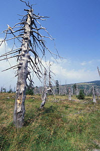 Tree killed by industrial pollution from Poland, Kronkose NP, Czech Republic - Paul Johnson