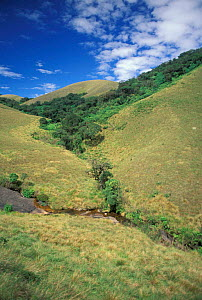Stream running through grassland and Shola ecosystem Eravikulam NP, Kerala, India  -  Ian Lockwood