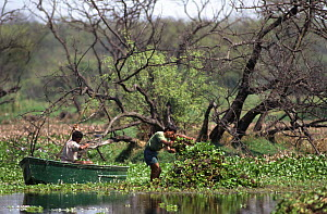 Removal of water hyacinth by forest department employees, Keoladeo Ghana NP, Bharatpur, Rajasthan, India.  This invasive aquatic plant chokes up the water ways if not managed.  -  Bernard Castelein