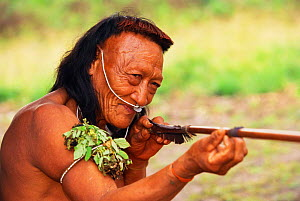 Yaminahua Indian man with blowpipe and arrow. Boca Mishagua River, Amazon rainforest, Peru. South America. People contacted in 1988  -  Pete Oxford